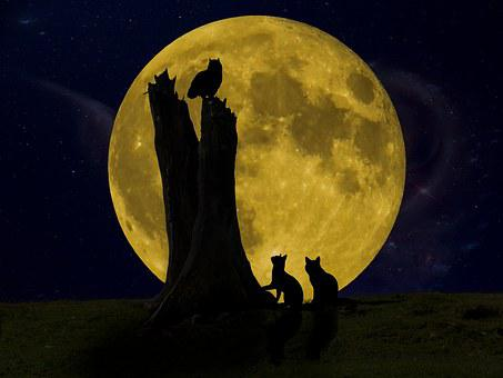 Good Night, Moon, Owl, Cat, Night, Seem, Light, Dark