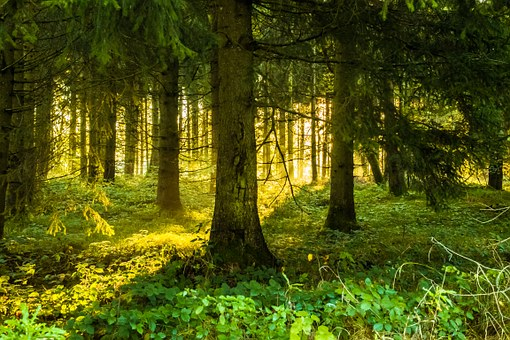 Trees, Forest, Lighting, Sunrise, Nature, Landscape