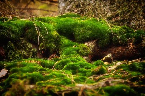 Moss, Forest, Green, Nature, Moss Fliegenpilz, Bemoost