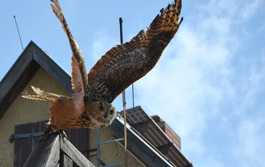 Owl, Departure, Start, Fly, Bird, Close, Wing, Feather