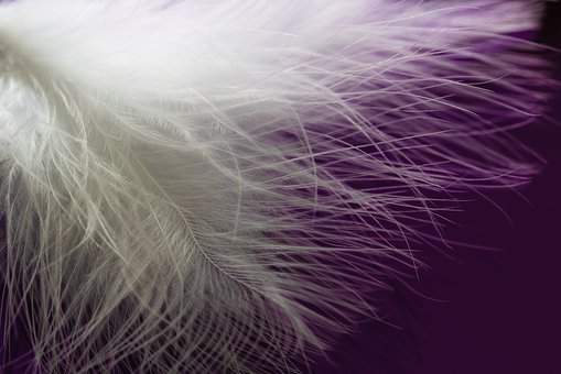 Feather, Ease, Airy, Plumage, Bird Feather