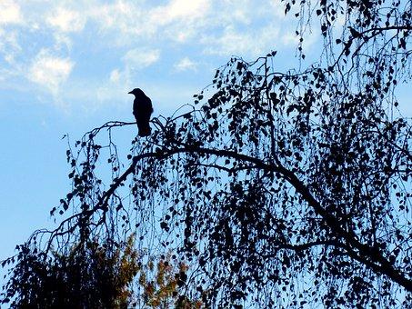 Crow, Black, Bird, Plumage, Raven Bird, Silent, Flying
