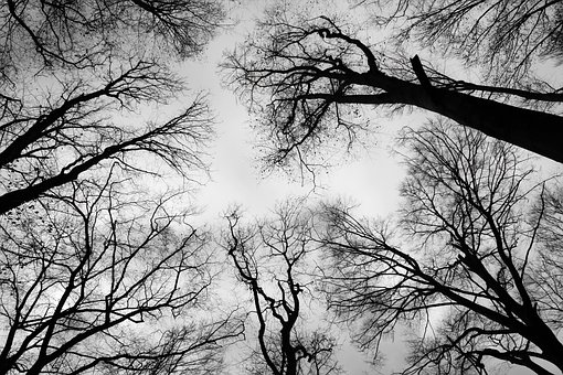 Crown, Bald Branch, Sky, Black And White, Trees, Nature