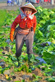 Humanities, Cultivate, Rural, Old, Lady, Woman, Worker