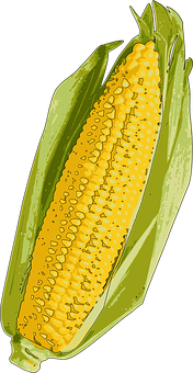Corn, Corn On The Cob, Indiana, My Picks, Sweet Corn