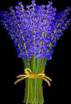 Lavender Bunch, Lavender Of Provence, French Lavender