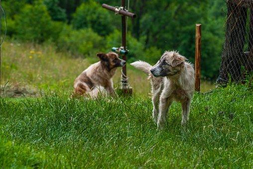 Dog, Guard Dog, Animal, Domestic, Pet