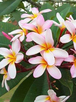 Bali, Paradise, Travel, Tropical, Nature, Exotic