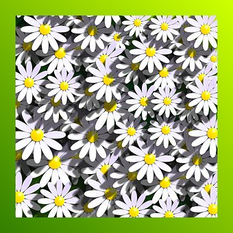 Marigolds, Daisies, Flowers, Flower, Floral, Flowery