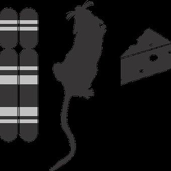 Genotype Phenotype Environment Icon, G2p, Genotype