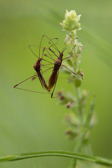 Insects, Nature, Dragonfly, Wing, Close, Love, Macro