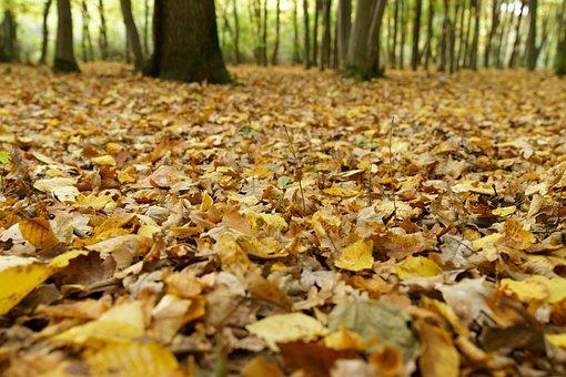 Leaves, Forest, Nature, Autumn, Landscape, September