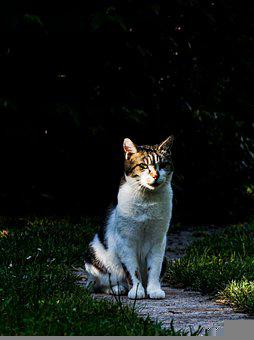 Cat, Light, Animals, Shadow, Dark