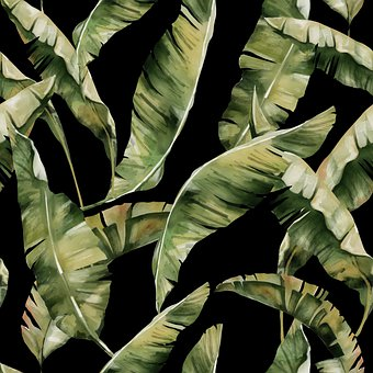 Leaves, Tropical, Nature, Plant, Palm, Summer, Exotic