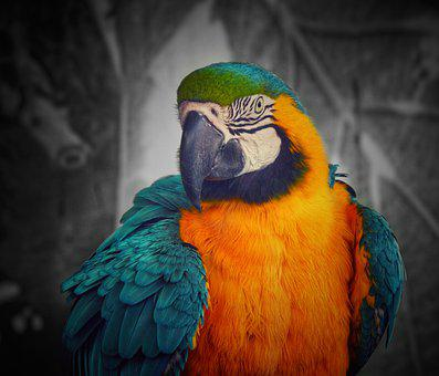 Acolours, Parrot, Parrots, Black-and-whites, Wildlife