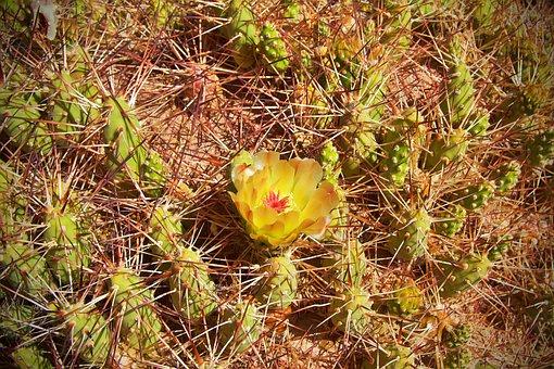 Chile, Cactus, Nature, Desert, Atacama, Dry
