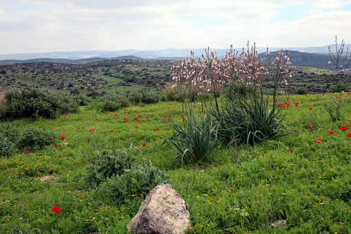Anemone, Flower, Rock, Stone, Nature