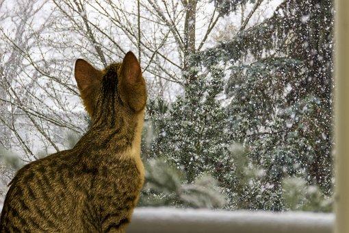 Cat, Small, Mackerel, Watch, Curious