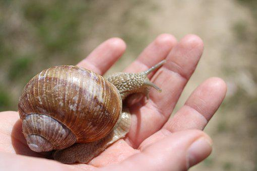 Snail, Hand, Nature, Blue, Ground, Brown