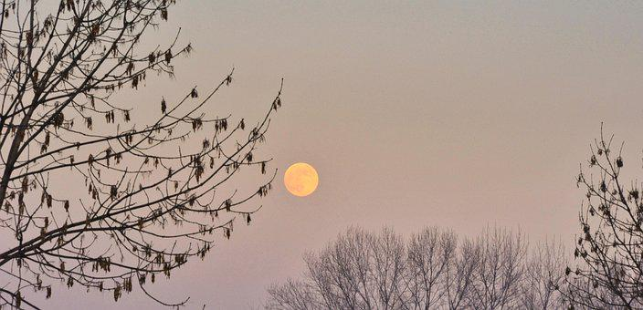 Luna, Trees, Leaves, Branches, Winter, Nature