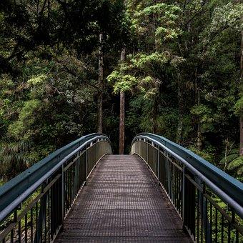 Tree, Photo, Forest, Nikon, Frame, Dslr, Nature, Magic