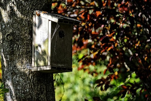 Nest Box, Birds, Old, Garden, Tree, Park, Isolated Form