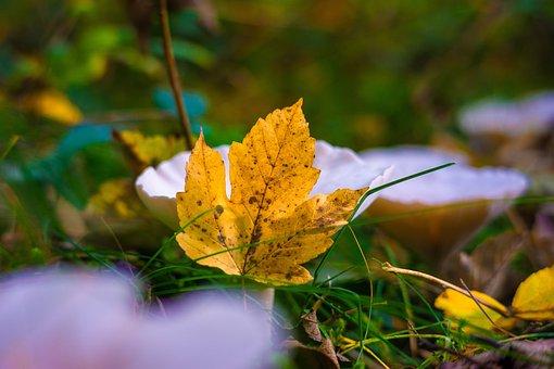 Leaves, Nature, Forest, Maple, Mushrooms