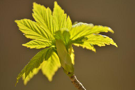 Spring, Leaves, Leaf, Green, Nature