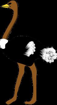 Ostrich, Large Bird, Flightless Bird, Ostric Fethers