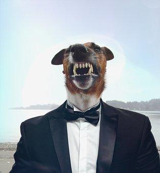 Dog, Suit, Businessman, Manager, Funny, Pet, Portrait