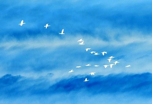 Birds, In, Flight, Silhouette, Sky