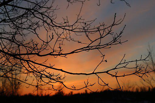Sunset, Branches, Sky, Autumn, Tree