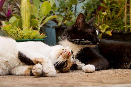 Cats, Cat, Feline, Animal, Animals, Kitten, Beautiful