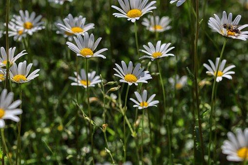 Marga Renon, Flowers, Summer, Spring, Meadow, Blossom