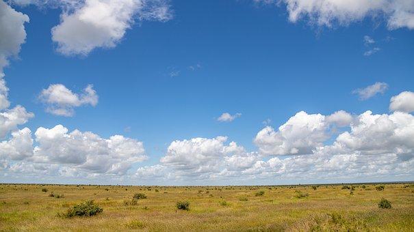 Landscape, Bush, Clouds, Grass, Africa, South Africa