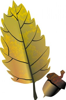 Acorn, Tree, Fruit, Oak, Close-up, Isolated, Origins
