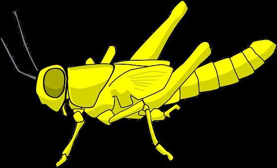 Locusts, Pest, Insect, Destructive, Bug, Grasshopper