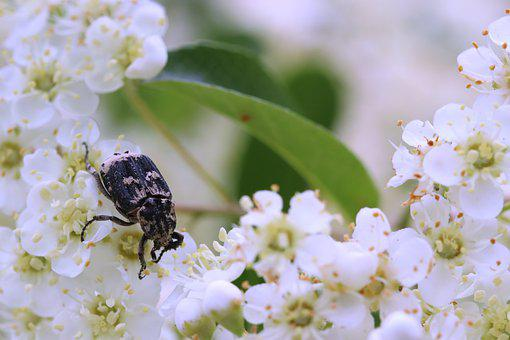 Beetle, Nature, Black, Insect, Animal