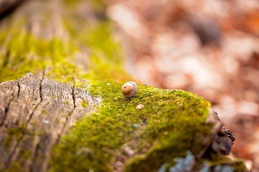 Acorn, Fall, Nature, Tree, Park, Season