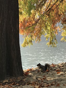 Nature, Green, Squirrel, Water, Autumn, Animali