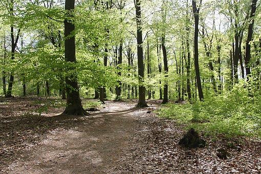 Forest, Nature, Bäumem Book, Spring, Green, Leaves