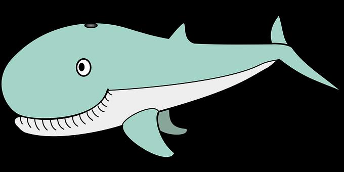 Whale, Animal, Ocean, Sea, Funny, Happy