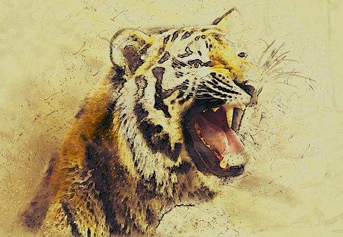Animal, Tiger, Big Cat, Predator