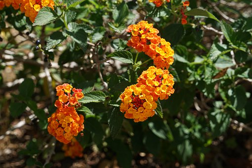 Plant, Flower, Flora, Beautiful, Spring, Flowering