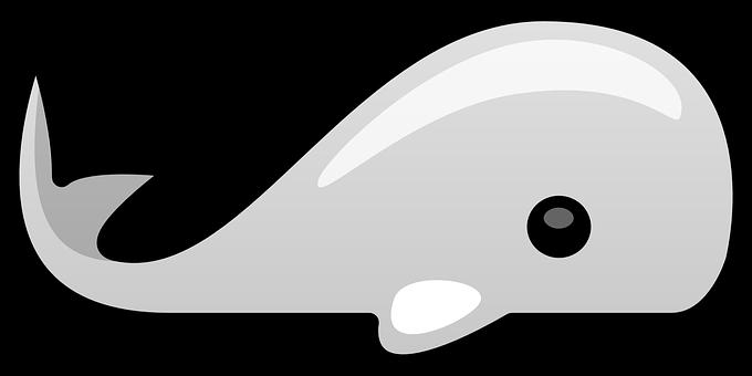 Whale, Animal, Mammal, Ocean, Nature, Fish, Wildlife
