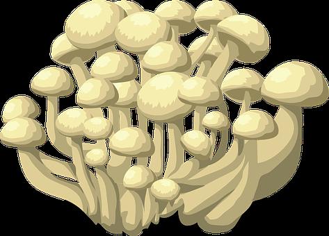 Mushrooms, White, Fungus, Fungi, Vegetables, Fresh