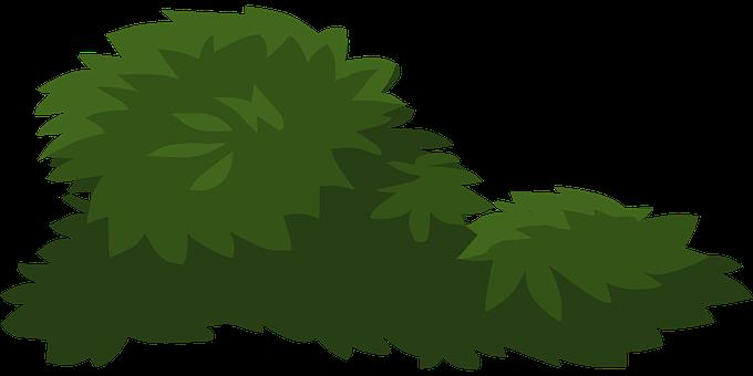 Plants, Green, Leaves, Leafy, Greenery, Flora