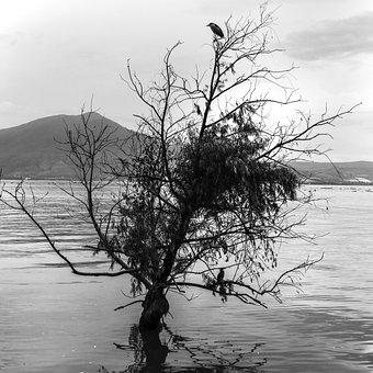 Lake, Chapala, Jalisco Mexico, Mexico
