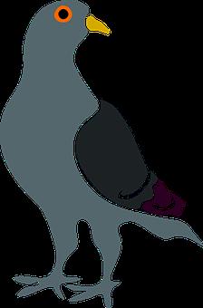 Pigeon, Grey, Blue, White, Plumage, Bird, Standing