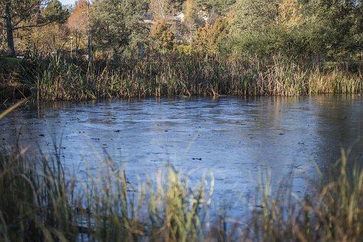 Pond, Autumn, Park, Water, Blue, Nature